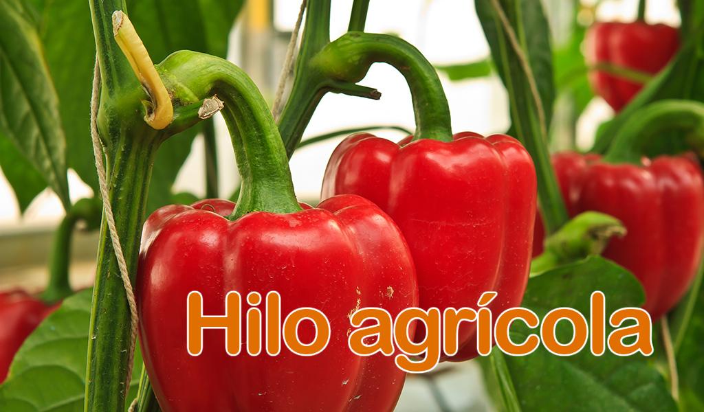 Hilo agrícola