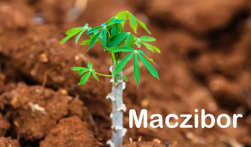 Maczibor
