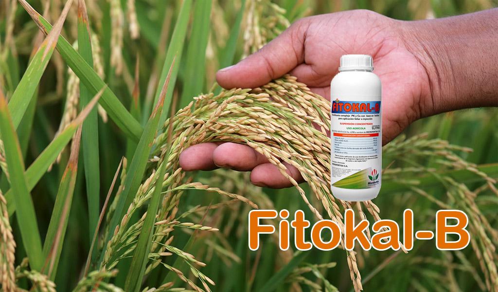Fitokal-B
