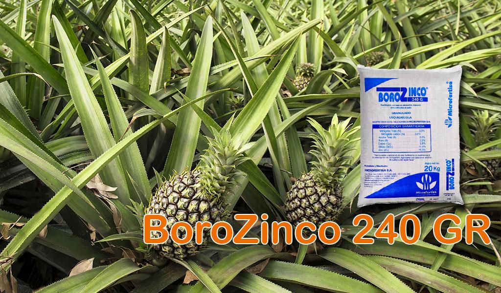 BoroZinco 240 GR