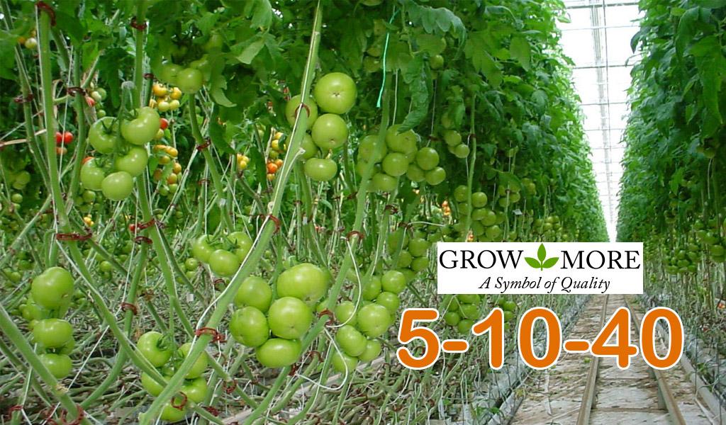 Grow More (5-10-40)