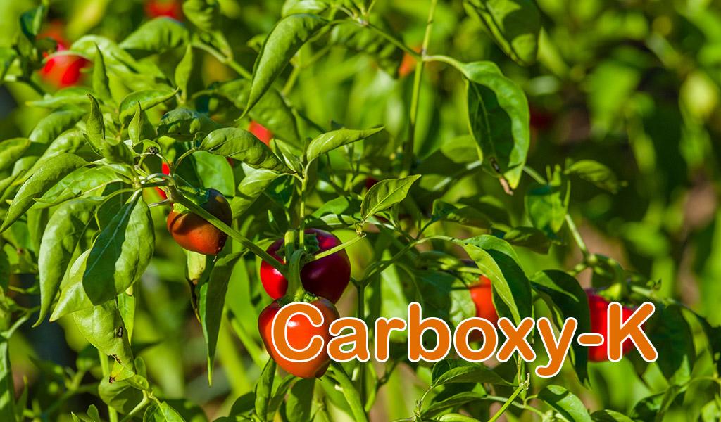 Carboxy-K