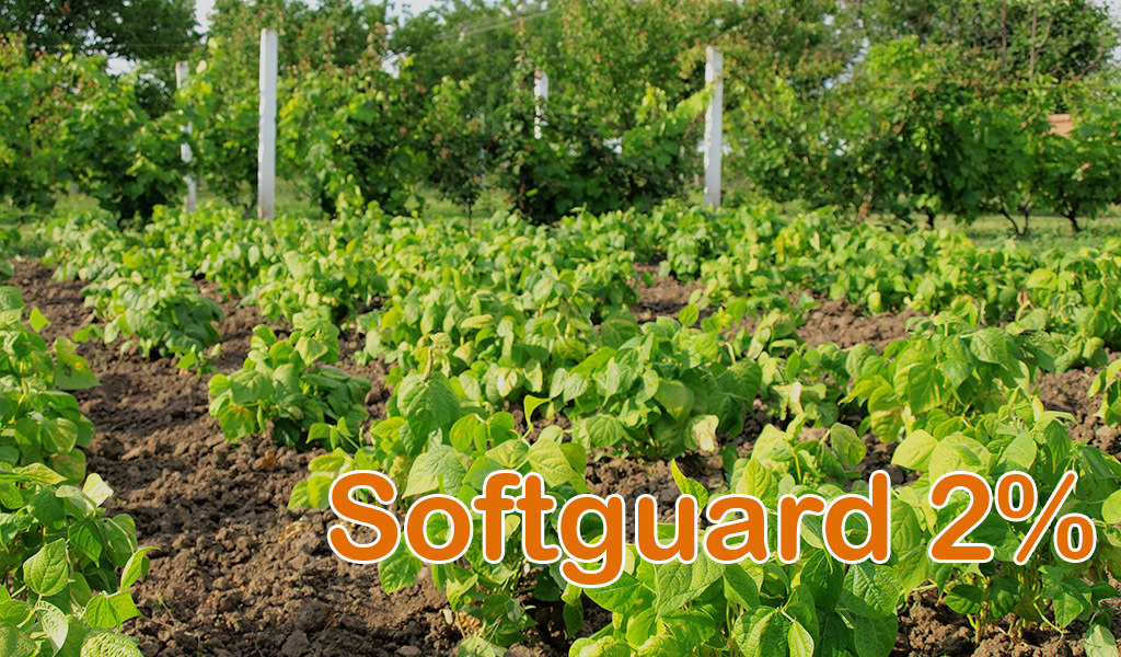 Softguard 2%
